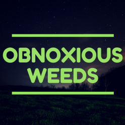 Obnoxious Weeds